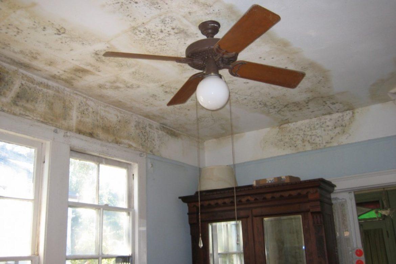 black-mold-ceiling-862x646